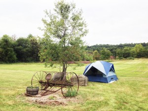 Camping-tent-by-tree