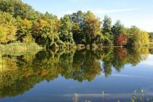 Lake-and-Foliage